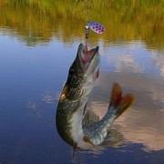 Fishing85