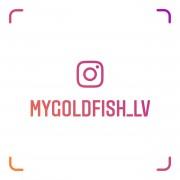 mygoldfish